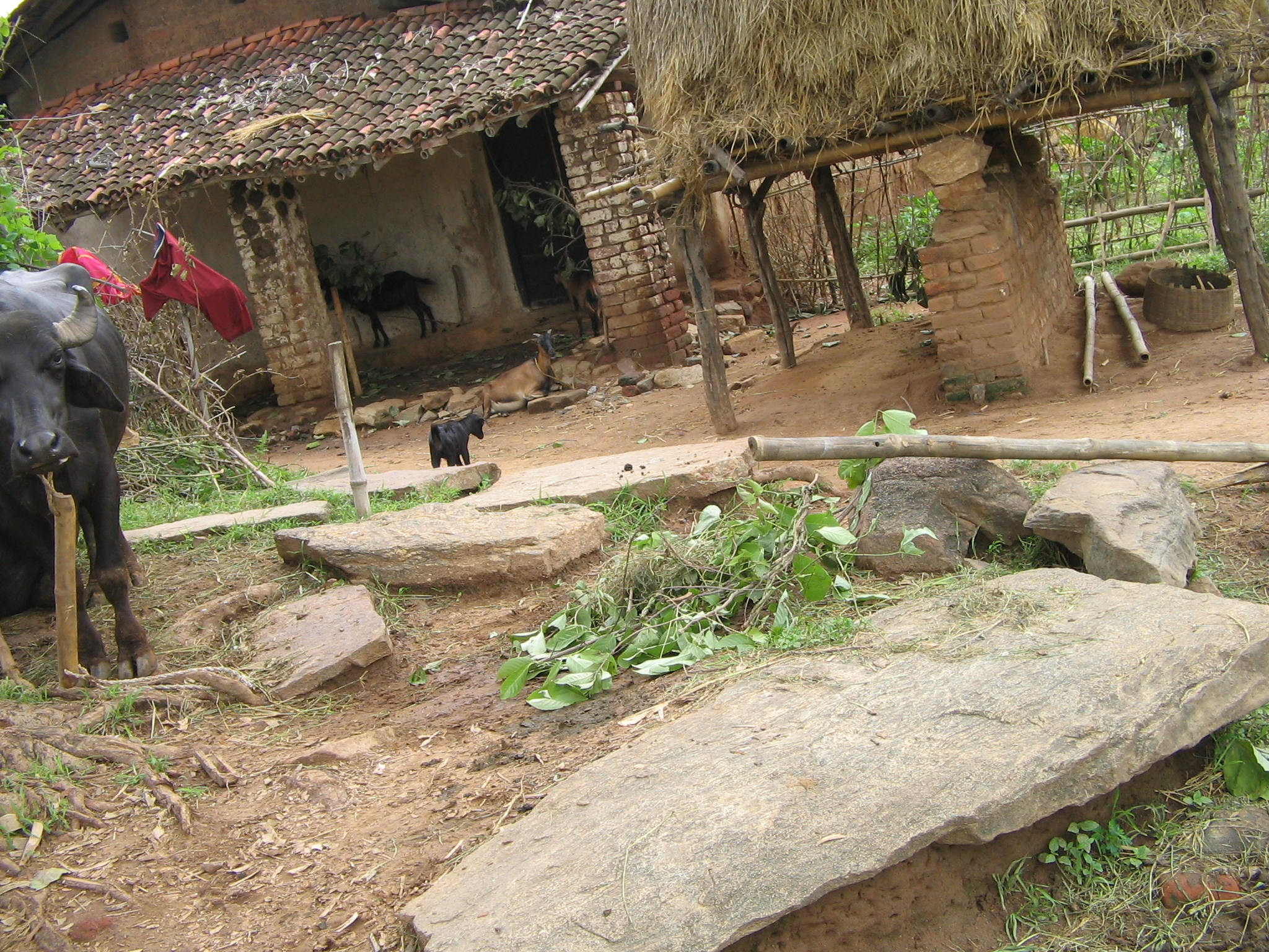 Megaliths of Jamsingh Village Ramgarh